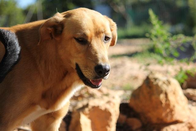 Bildertagebuch - Agora, ein ehemaliger Straßenhund sucht ihr Zuhause - VERMITTELT! 34148699la
