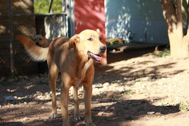 Bildertagebuch - Agora, ein ehemaliger Straßenhund sucht ihr Zuhause - VERMITTELT! 34148700oz