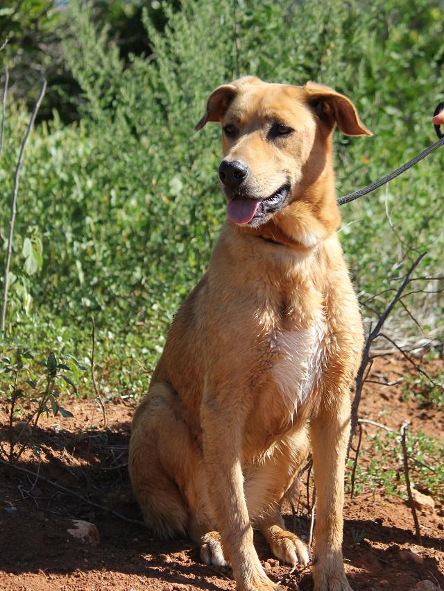 Bildertagebuch - Agora, ein ehemaliger Straßenhund sucht ihr Zuhause - VERMITTELT! 34148703ld