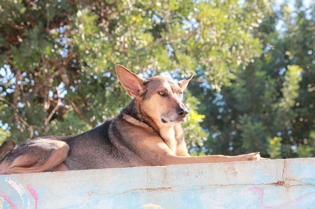 Bildertagebuch - PUPI möchte endlich auf der Sonnenseite des Lebens stehen - VERMITTELT - 34166158ra