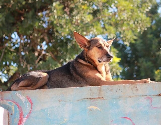 Bildertagebuch - Pupi, möchte endlich auf der Sonnenseite des Lebens stehen! 34166174mz