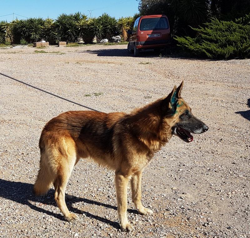 Bildertgebuch - Cash, ein Freund für´s ganze Hundeleben 34290331bf