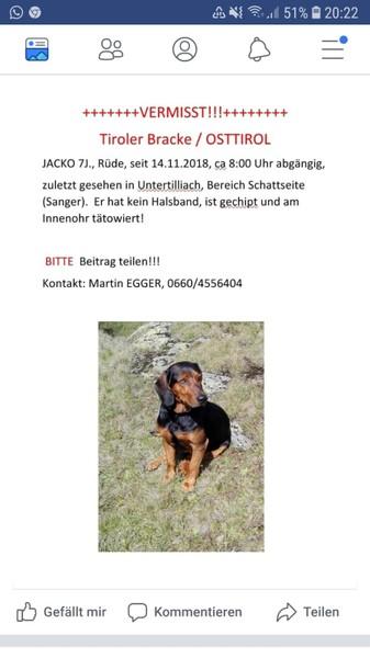 Tiroler Bracke vermisst 34352909hr