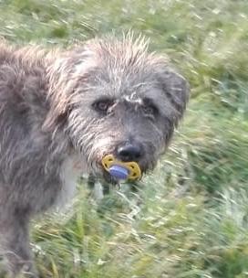 Bildertagebuch - Freddy (ehem. Django), verspielter Hund mit Flausen im Kopf - VERMITTELT! 34419018xy