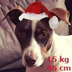 Bildertagebuch  - Kylo: ein bildschöner, eleganter, und cleverer Hund für aktive Menschen! - VERMITTELT- 34558249rq