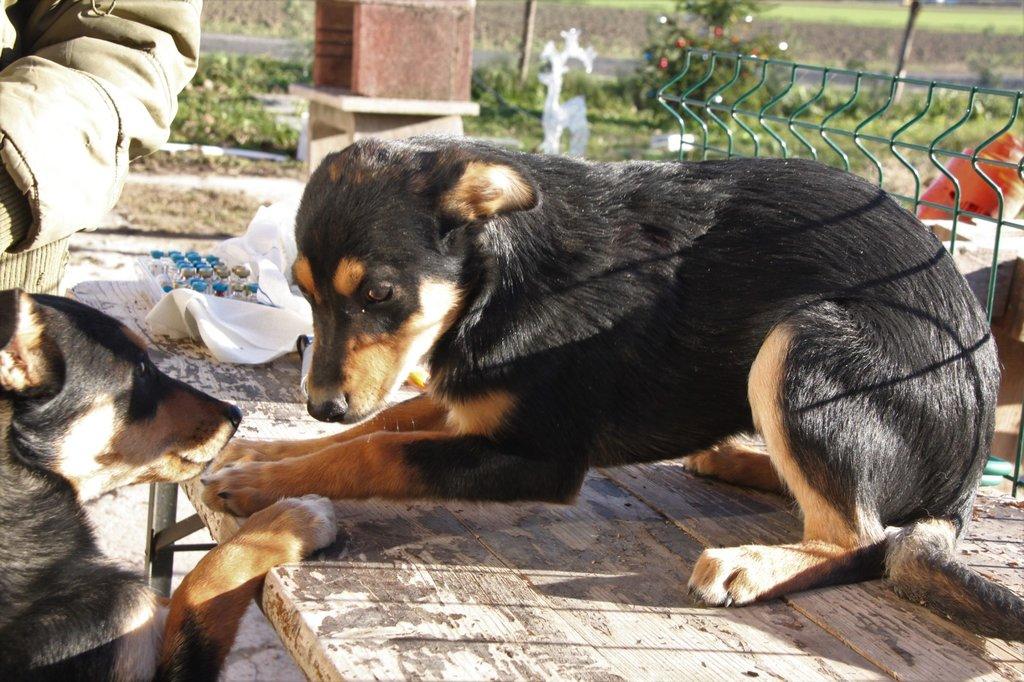 Bildertagebuch - Ombra möchte wie ihre Geschwister.... eine Familie - VERMITTELT - 34576671ak