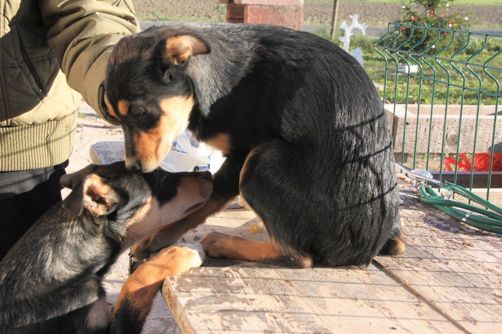 Bildertagebuch - Ombra möchte wie ihre Geschwister.... eine Familie - VERMITTELT - 34576676qv
