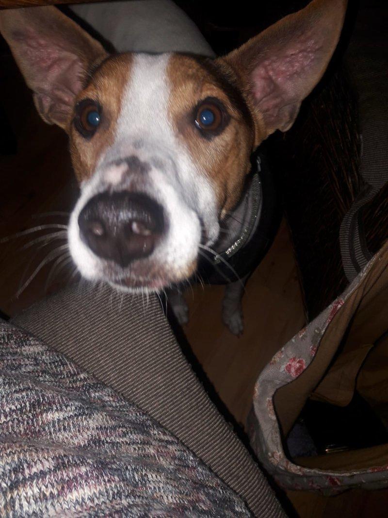 Bildertagebuch - Jasper: kleiner Sunnyboy auf der Suche nach seinem Zuhause! - VERMITTELT- 34741451wn