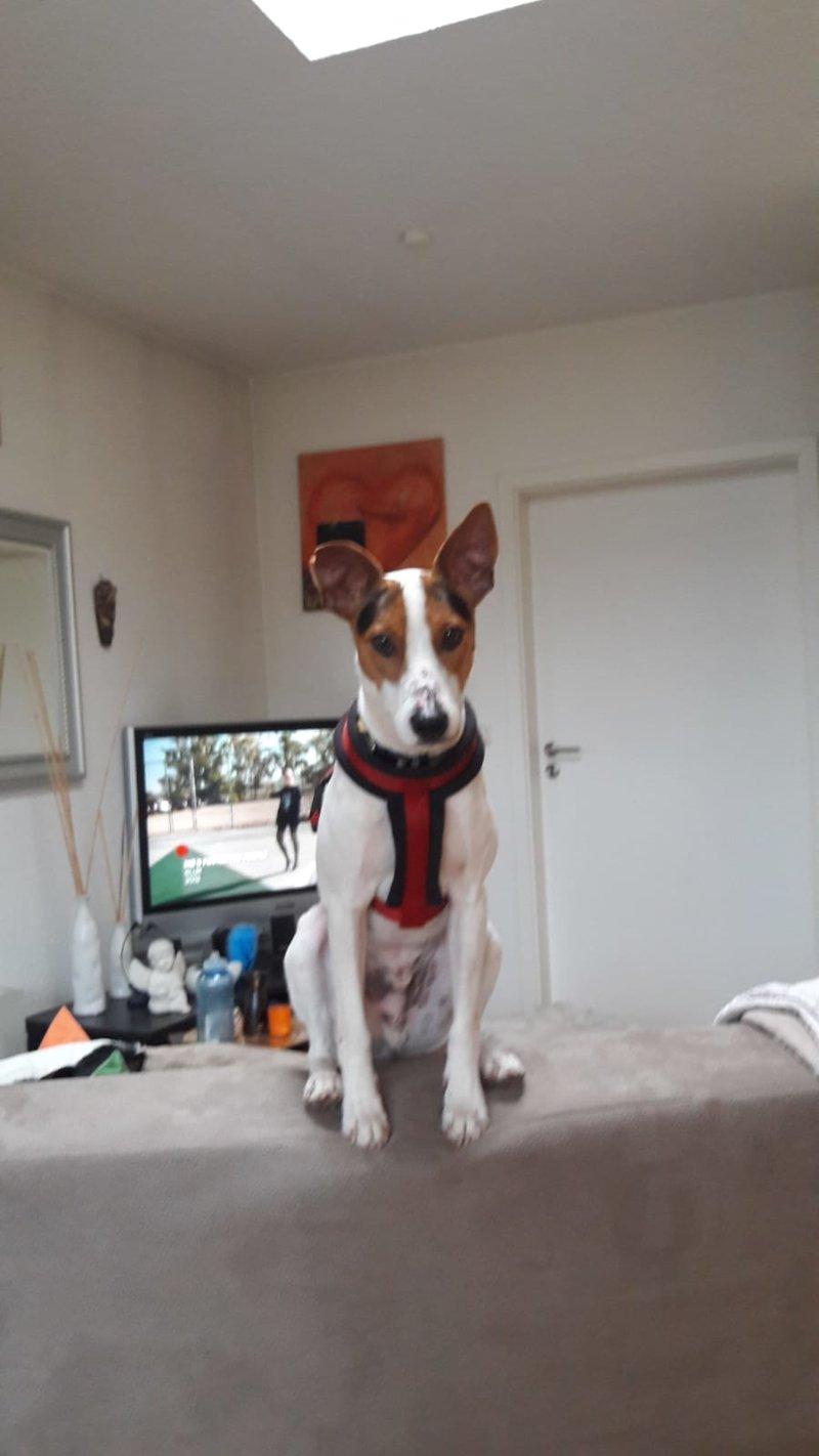 Bildertagebuch - Jasper: kleiner Sunnyboy auf der Suche nach seinem Zuhause! - VERMITTELT- 34741453ik