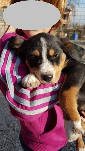 Bildertagebuch - Melinda, süße kleine Welpenmaus ...  34892946vt