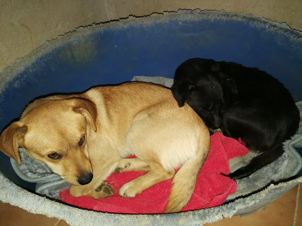 Bildertagebuch - Cody, ein süßer kleiner Schnuggel und seine kleine Freundin hoffen auf eine Chance - VERMITTELT - 34968247bh
