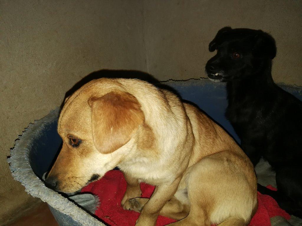 Bildertagebuch - Cody, ein süßer kleiner Schnuggel und seine kleine Freundin hoffen auf eine Chance - VERMITTELT - 34968250sa