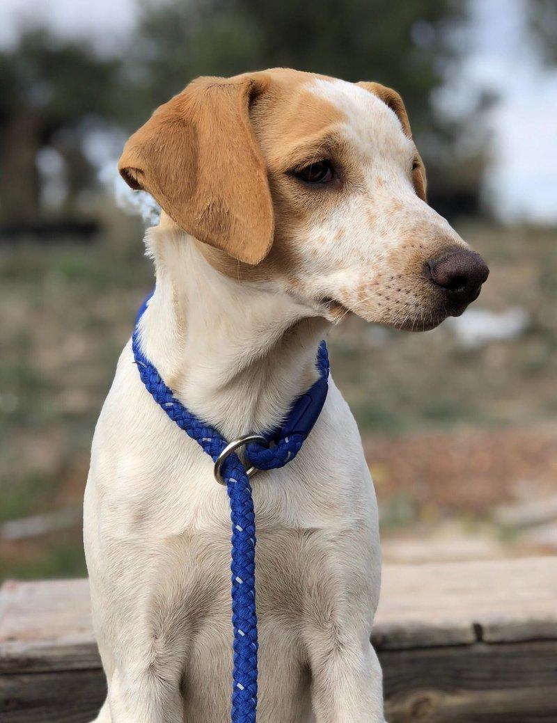 Bildertagebuch - Ringo: Ein besonders entzückender Junghund mit ganz viel Charme!- VERMITTELT - 34974627cn