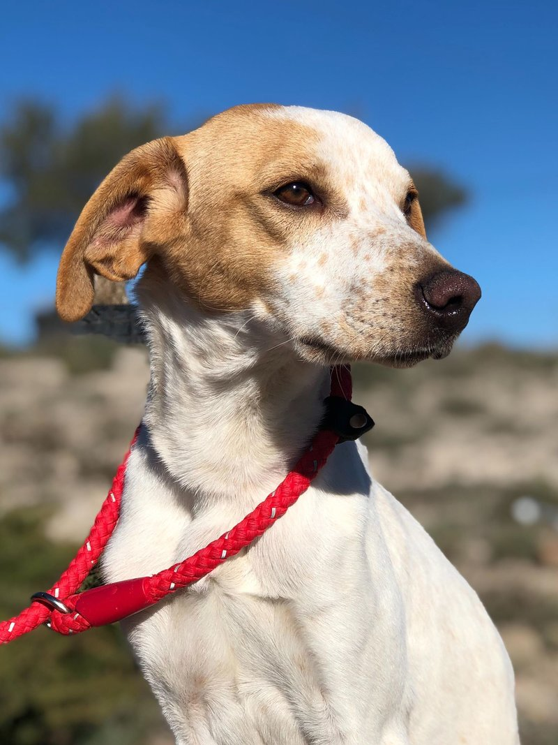 Bildertagebuch - Ringo: Ein besonders entzückender Junghund mit ganz viel Charme!- VERMITTELT - 34974638es