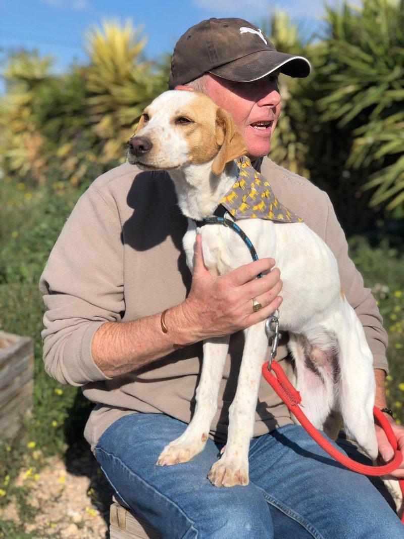 Bildertagebuch - Ringo: Ein besonders entzückender Junghund mit ganz viel Charme!- VERMITTELT - 34974643op