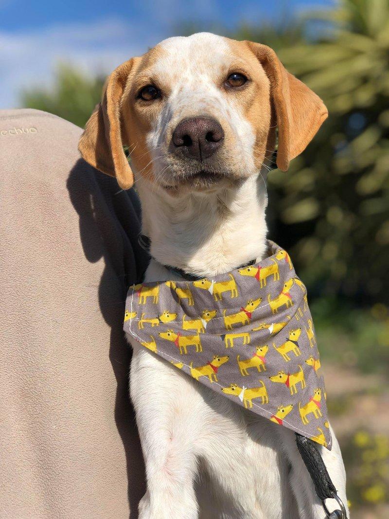Bildertagebuch - Ringo: Ein besonders entzückender Junghund mit ganz viel Charme!- VERMITTELT - 34974646ge