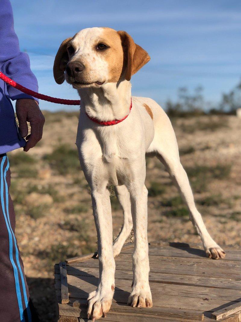 Bildertagebuch - Ringo: Ein besonders entzückender Junghund mit ganz viel Charme!- VERMITTELT - 34974654an