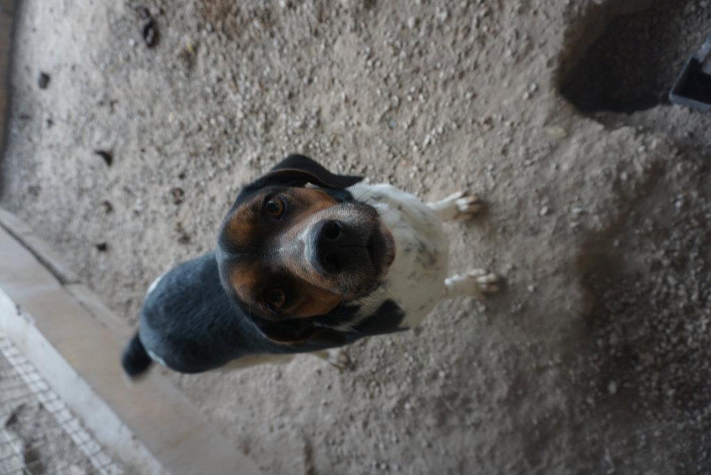 Bildertagebuch - Rio, jung, verspielt und sehr freundlich, warum setzt man so einen Hund nur aus - VERMITTELT! 34993225cn