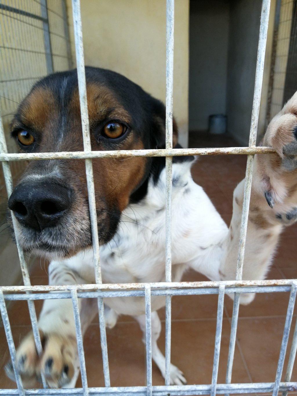 Bildertagebuch - Rio, jung, verspielt und sehr freundlich, warum setzt man so einen Hund nur aus - VERMITTELT! 34993230qk