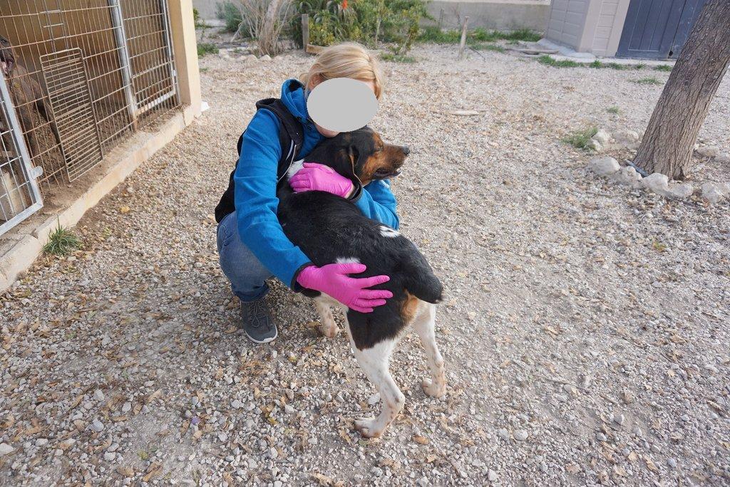Bildertagebuch - Rio, jung, verspielt und sehr freundlich, warum setzt man so einen Hund nur aus - VERMITTELT! 34993240hb