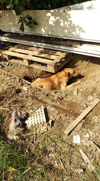 Bildertagebuch - Aliya wurde unter einem Müllhaufen geboren - VERMITTELT - 35020368kd
