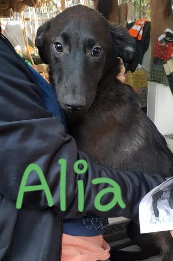 Bildertagebuch - Aliya wurde unter einem Müllhaufen geboren - VERMITTELT - 35020529jn