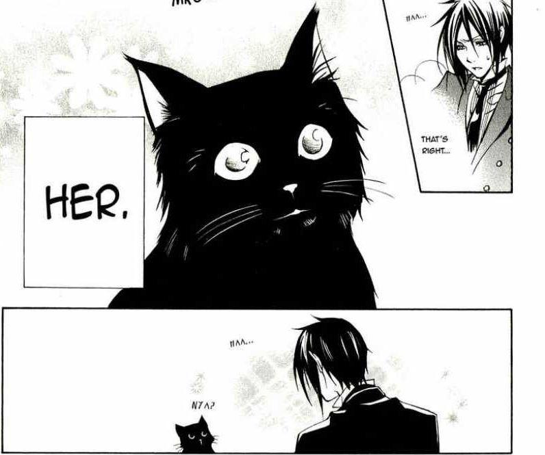 bb-cat