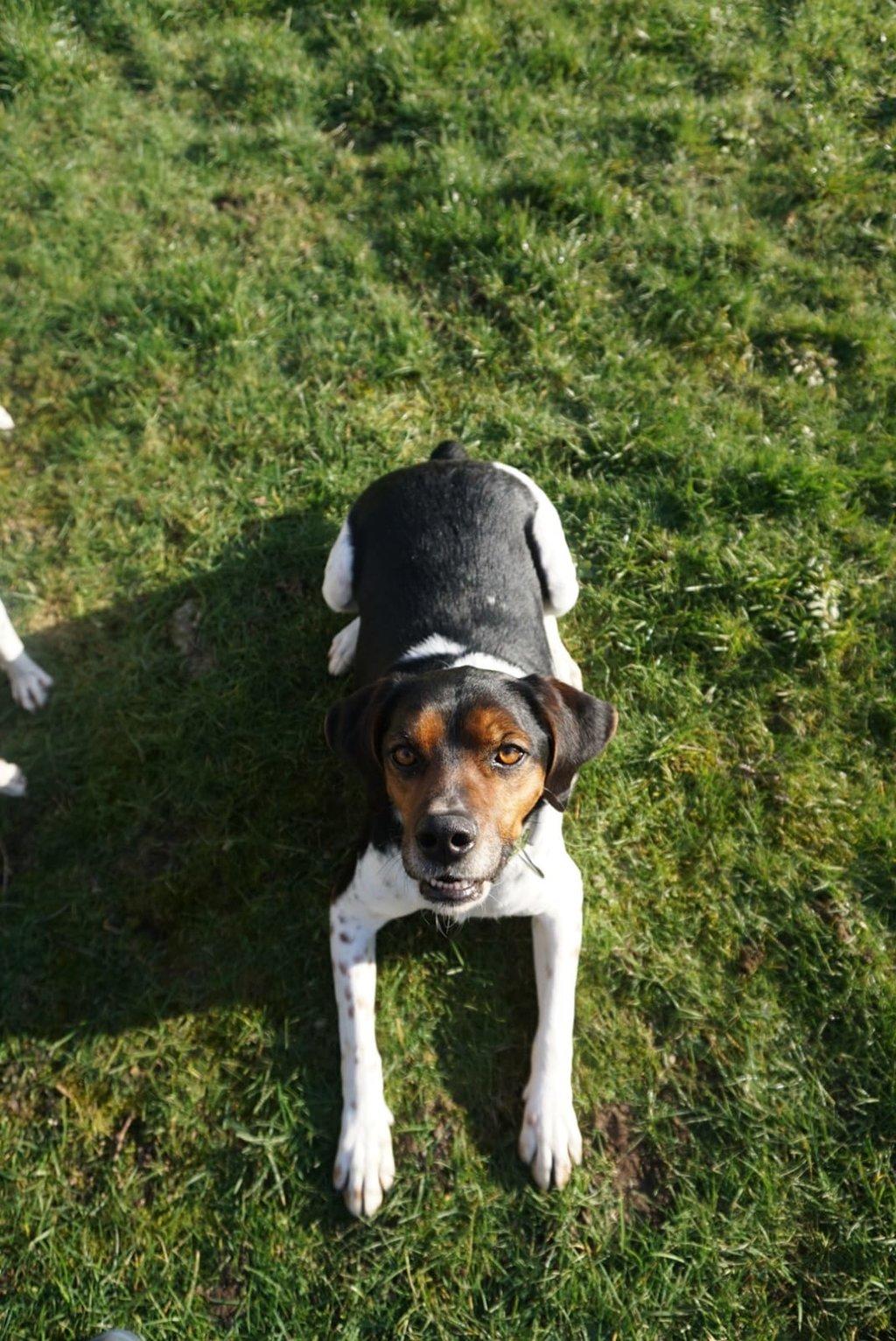 Bildertagebuch - Rio, jung, verspielt und sehr freundlich, warum setzt man so einen Hund nur aus - VERMITTELT! 35096657fg