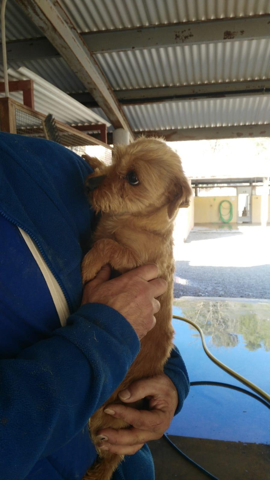 Bildertagebuch - Dakota, eine ganz süße kleine Maus lebte unter schlechten Bedingungen und wurde endlich befreit...VERMITTELT! 35124136uh