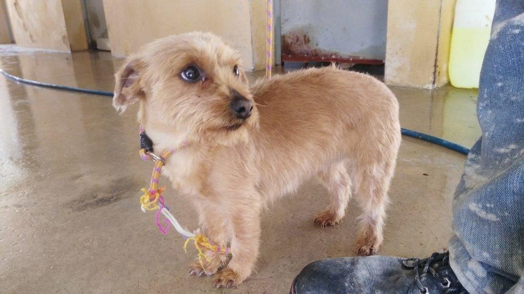Bildertagebuch - Dakota, eine ganz süße kleine Maus lebte unter schlechten Bedingungen und wurde endlich befreit...VERMITTELT! 35124140po