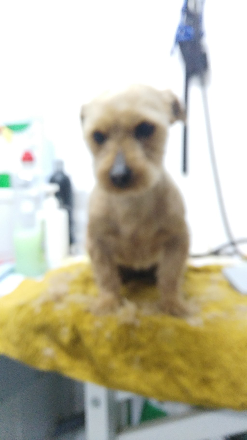 Bildertagebuch - Dakota, eine ganz süße kleine Maus lebte unter schlechten Bedingungen und wurde endlich befreit...VERMITTELT! 35124144vq