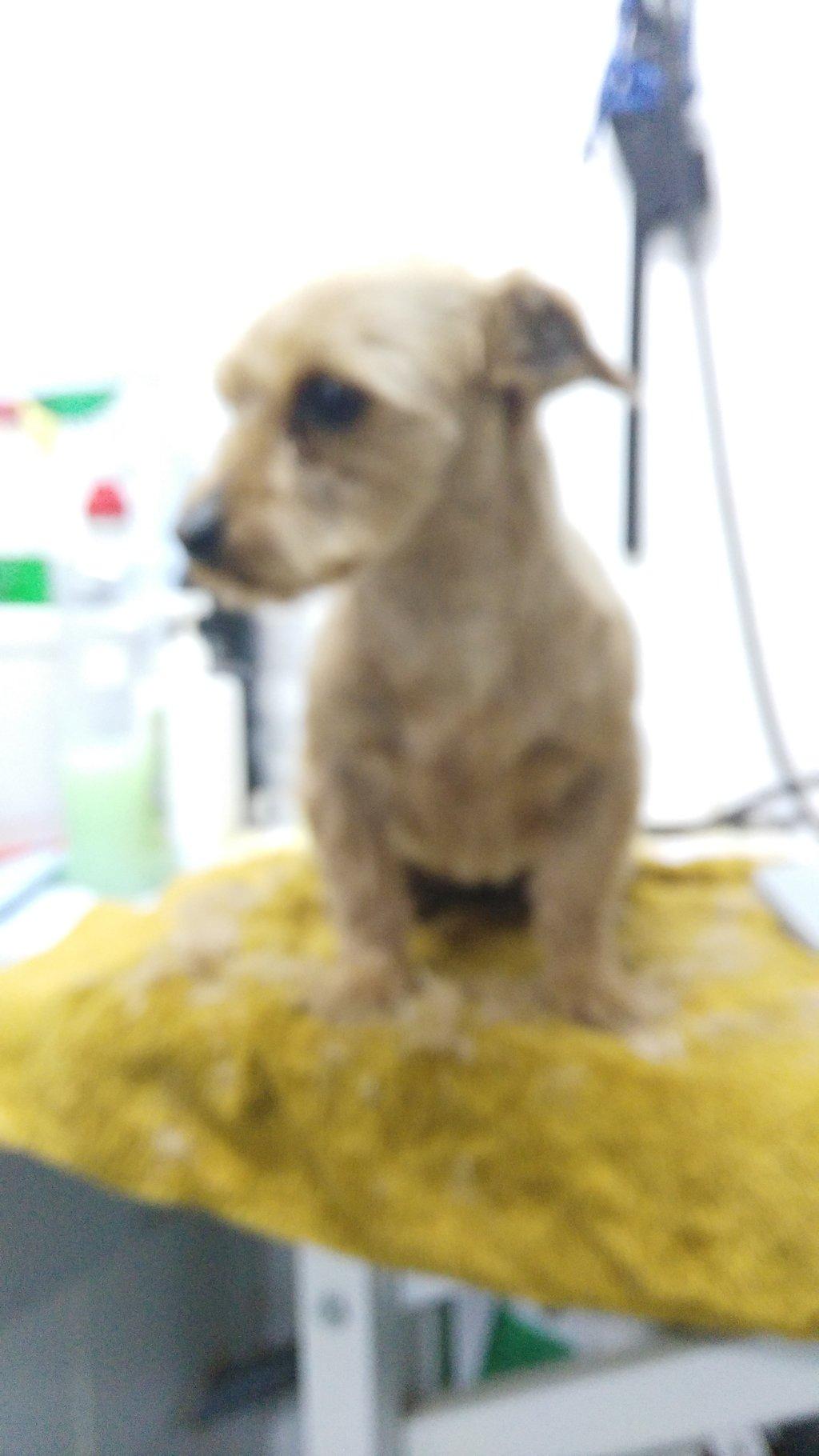 Bildertagebuch - Dakota, eine ganz süße kleine Maus lebte unter schlechten Bedingungen und wurde endlich befreit...VERMITTELT! 35124147fo