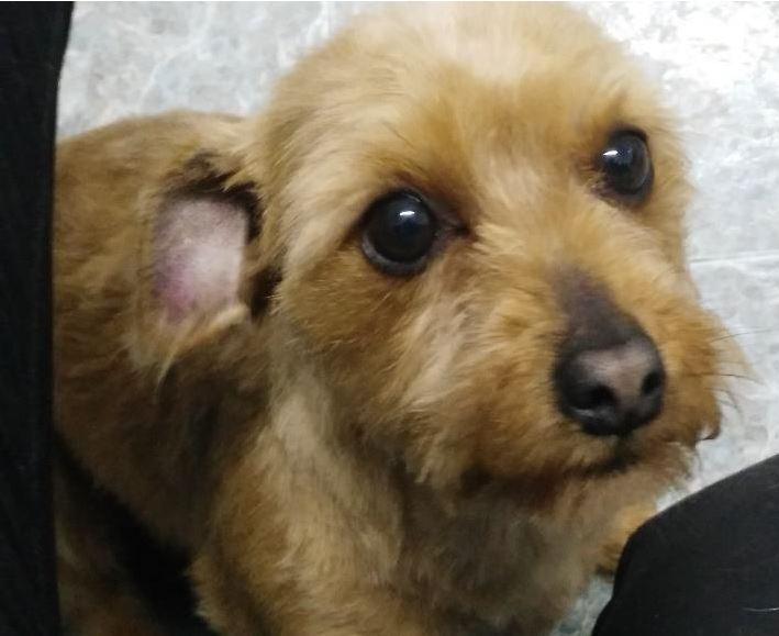 Bildertagebuch - Dakota, eine ganz süße kleine Maus lebte unter schlechten Bedingungen und wurde endlich befreit...VERMITTELT! 35124579wk