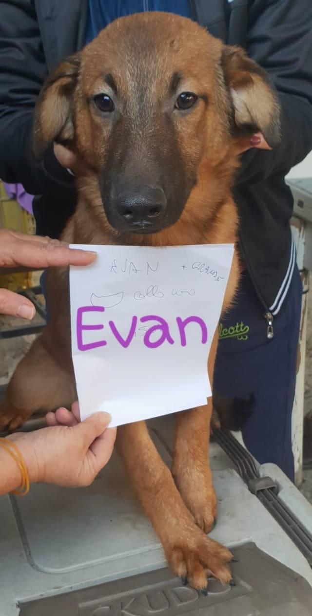 Bildertagebuch - EVAN, auch er wurde unter dem Trümmerhaufen geboren...VERMITTELT! 35131388bs