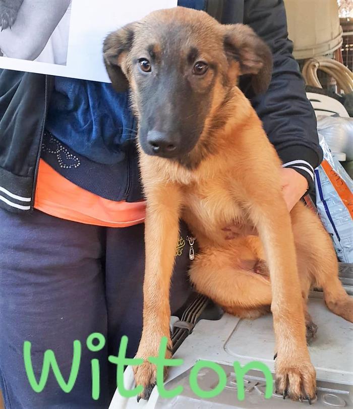 Bildertagebuch - WITTON wurde unter einem Schutthaufen geboren... 35131459mj