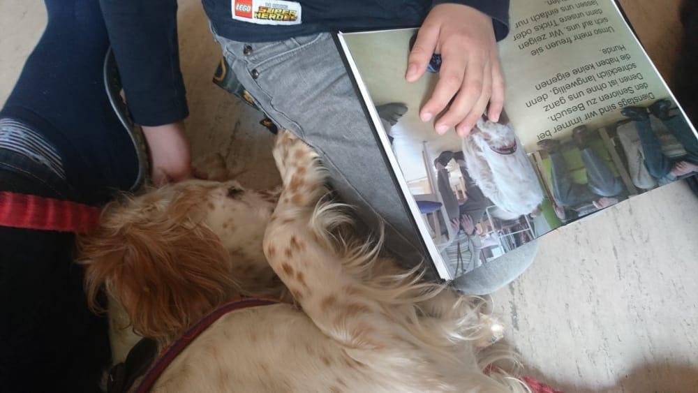 Bildertagebuch - Lotta musste in ihrem kurzen Leben bereits mindestens zweimal ihr Zuhause verlassen 35160837uy