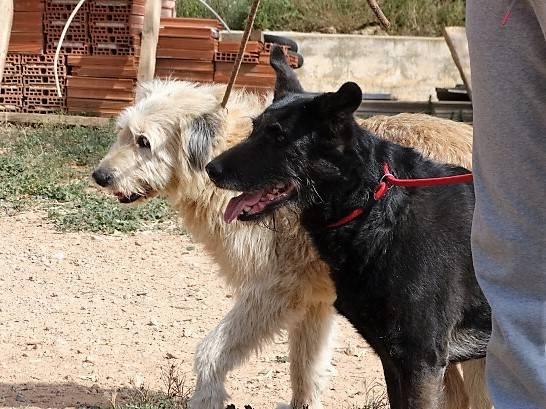 Bildertagebuch - Kira, ein absoluter Traumhund sucht ein Für-immer-Zuhause... VERMITTELT 35170675ph
