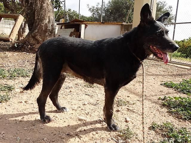 Bildertagebuch - Kira, ein absoluter Traumhund sucht ein Für-immer-Zuhause... VERMITTELT 35170678pr