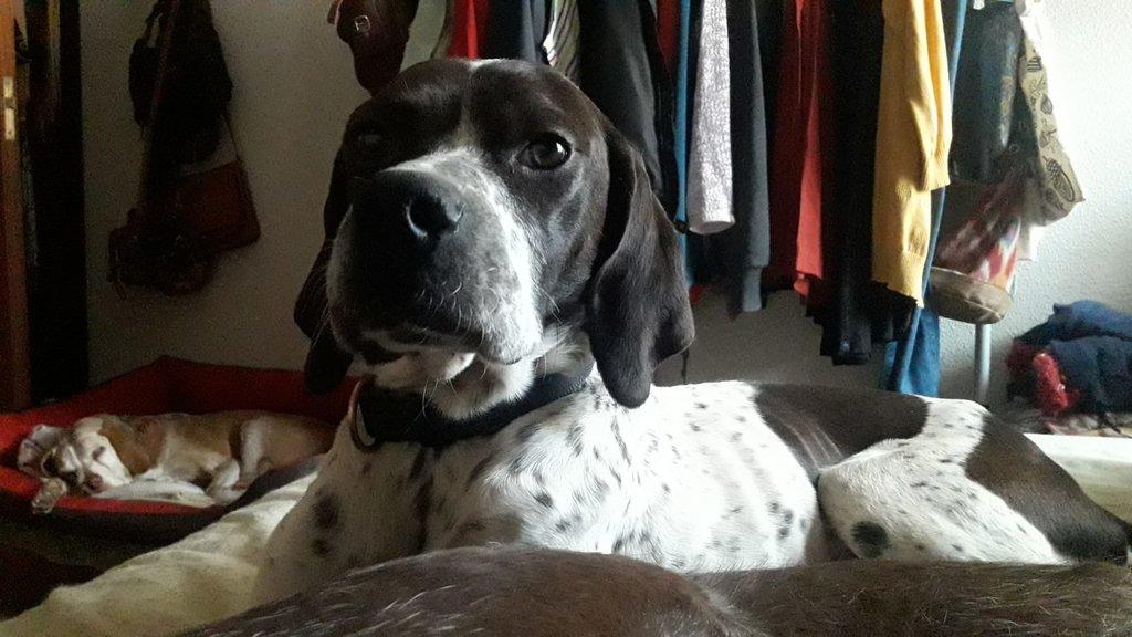Bildertagebuch - Emily II möchte der perfekte Familienhund bei Ihnen werden VERMITTELT! 35191831pv