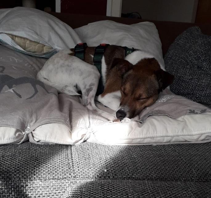 Bildertagebuch - Chase, der kleine Sonnenschein sucht sein FÜR- IMMER- ZUHAUSE! - VERMITTELT - 35209862wt