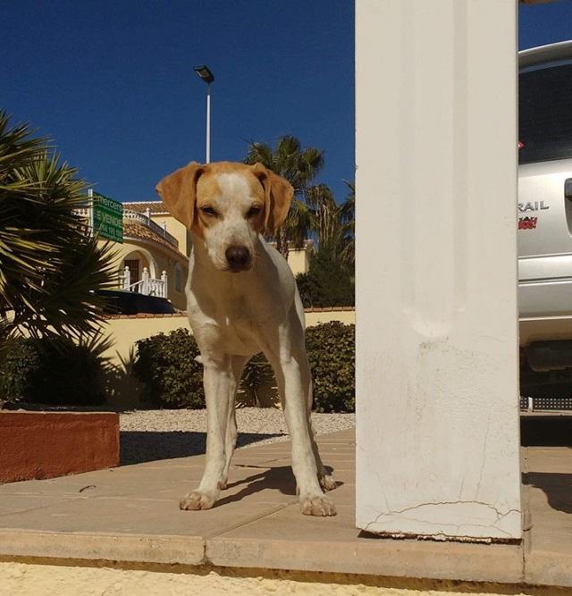 Bildertagebuch - Ringo: Ein besonders entzückender Junghund mit ganz viel Charme!- VERMITTELT - 35210956zm