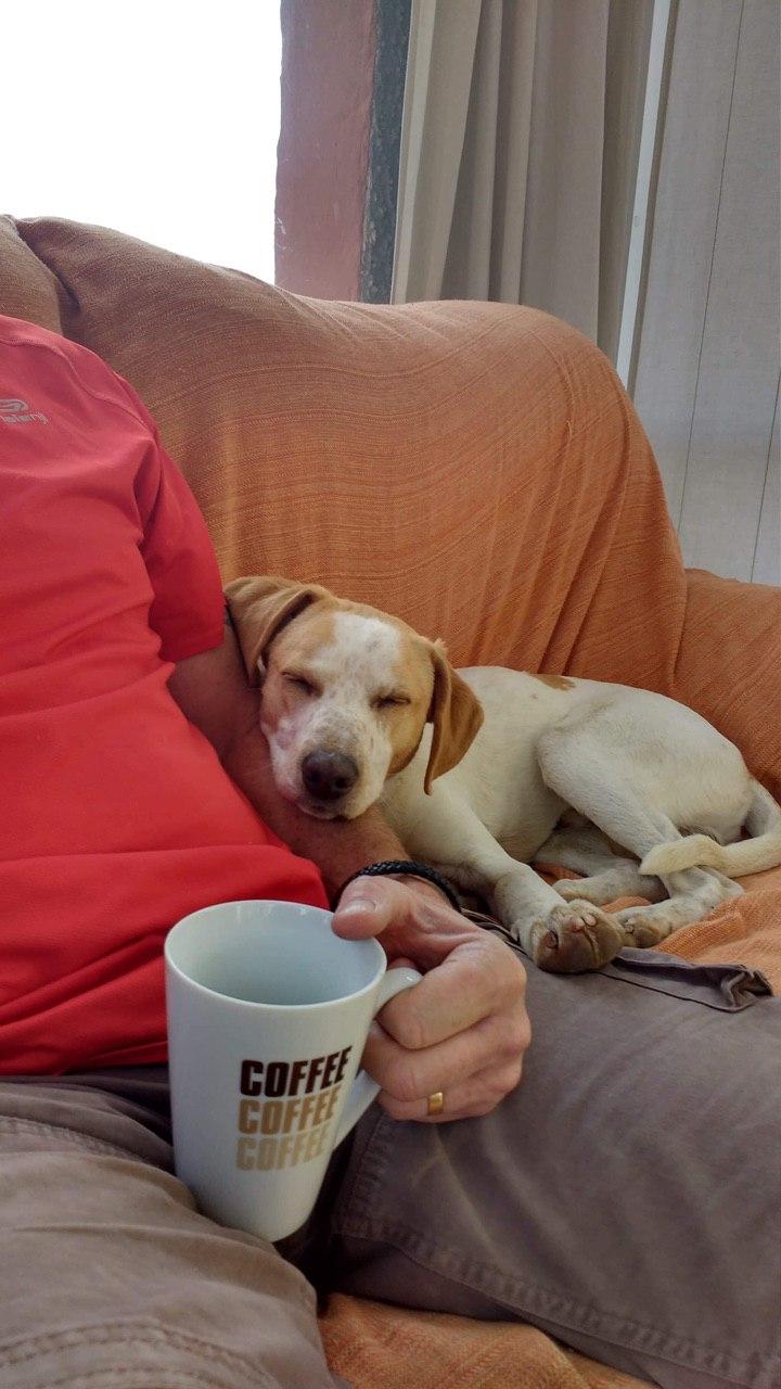 Bildertagebuch - Ringo: Ein besonders entzückender Junghund mit ganz viel Charme!- VERMITTELT - 35210962yz