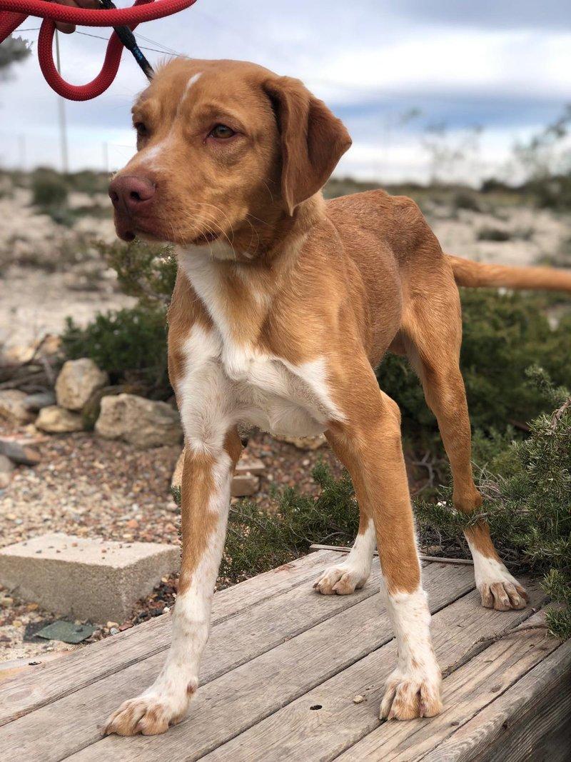 Bildertagebuch  - Troy: ein bildschöner, eleganter, und cleverer Hund für aktive Menschen! - VERMITTELT- 35234035xj