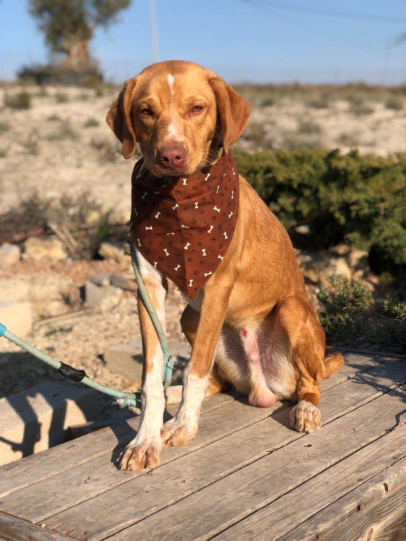 Bildertagebuch  - Troy: ein bildschöner, eleganter, und cleverer Hund für aktive Menschen! - VERMITTELT- 35234045rt
