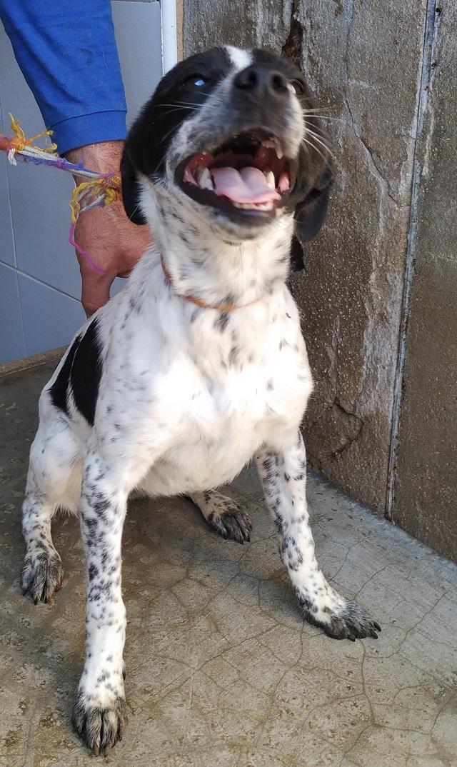 Bildertagebuch  - Mancha: zuckersüßes, verspieltes Hundemädchen sucht ihr Zuhause! - VERMITTELT - 35276563st