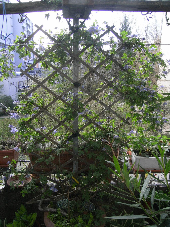 Balkon Neuling Sucht Schling Pflanze Als Sichtschutz Mein Schoner Garten Forum
