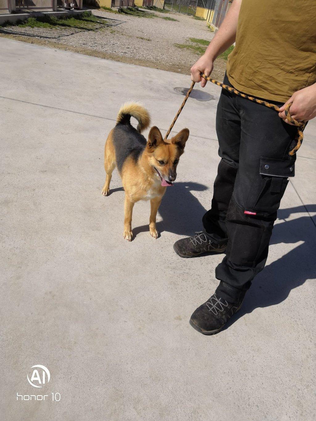 Bildertagebuch - Kity, die Miniaturausgabe eines Schäferhundes .... 35472333sj