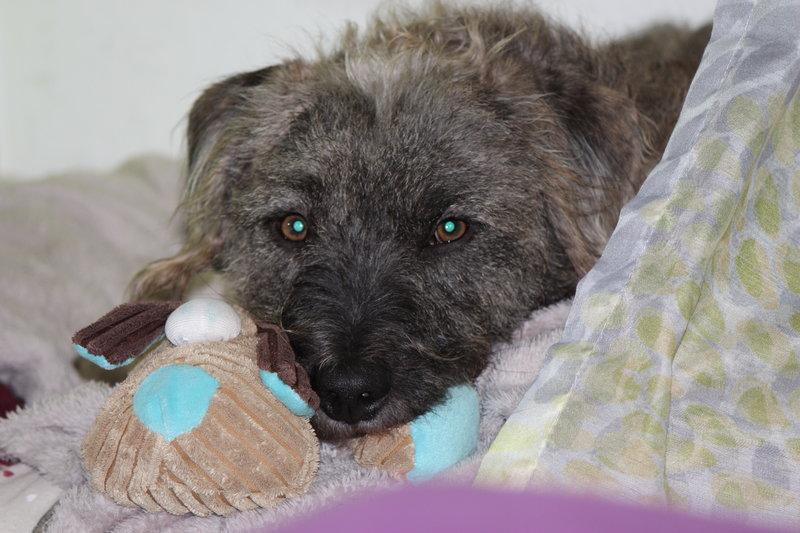 Bildertagebuch - Freddy (ehem. Django), verspielter Hund mit Flausen im Kopf - VERMITTELT! 35560882hk