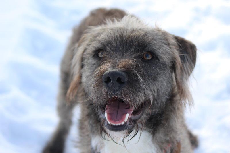 Bildertagebuch - Freddy (ehem. Django), verspielter Hund mit Flausen im Kopf - VERMITTELT! 35560884eb
