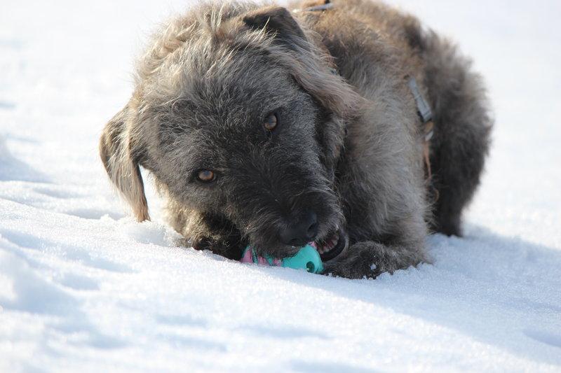 Bildertagebuch - Freddy (ehem. Django), verspielter Hund mit Flausen im Kopf - VERMITTELT! 35560886hu